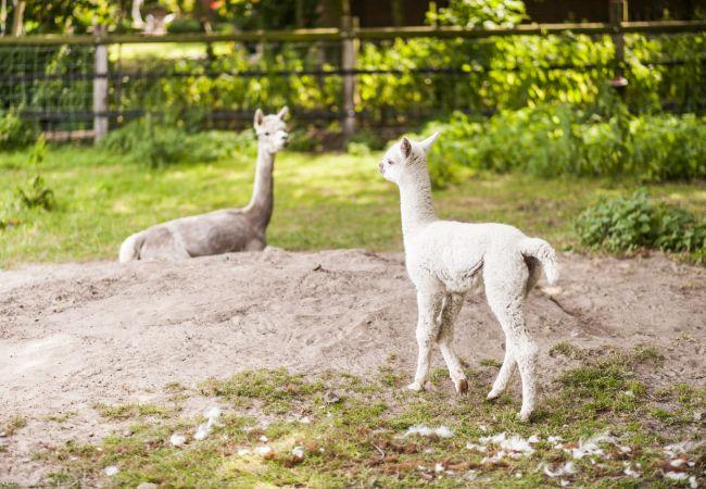 Agrotourismus in Dinklage - Bünner Hof, Rosengarten